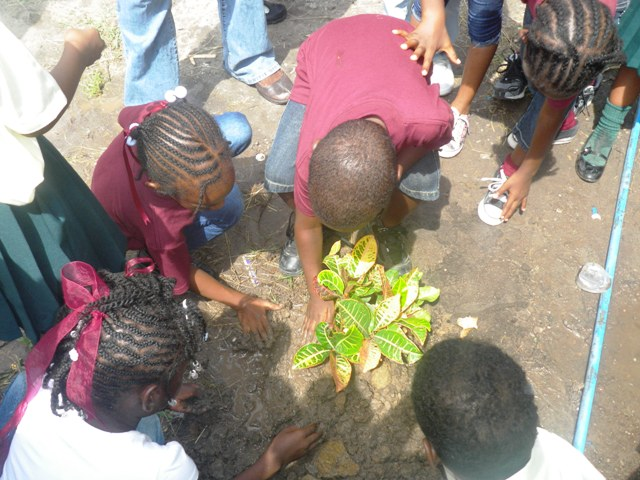 Students beautify their surroundings at the Ivor Walters Primary School.