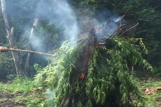 Police burning marijuana find, too big to be transported in the area where hundreds of trees were uprooted by members of the Task Force on Nevis