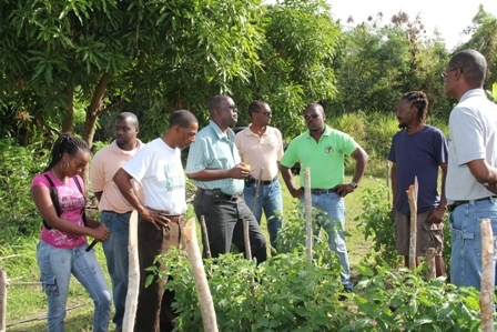 (Fourth from left) Minister of Agriculture on Nevis Hon. Robelto Hector, (fifth from left is Permanent Secretary in the Ministry of Agriculture Dr. Kelvin Daly, (extreme right) Director of Agriculture Mr. Keithley Amory with Agriculture Extension Officers touring the farm of (second from right) Farmer Mr. Mansa Tyson at Cades Bay