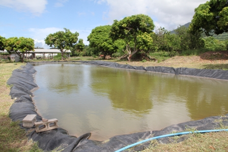 The pilot fish farm project at the Government owned farm at Prospect stocked with young tilapia fish