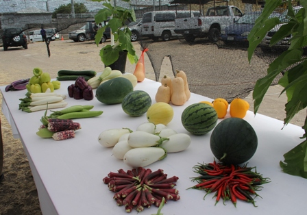 New varieties of vegetables on display by the Department of Agriculture's Marketing Division
