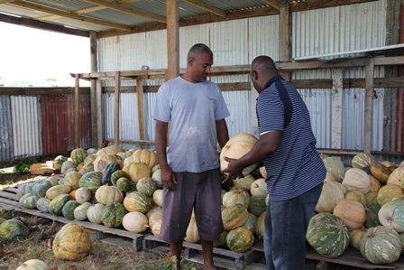 Minister of Agriculture in the Nevis Island Administration Hon. Alexis Jeffers visits with Farmer Sias Persaud at Clay Ghaut