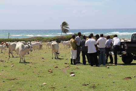 Minister of Agriculture in the Nevis Island Administration Hon. Alexis Jeffers and other Agriculture officials at government-owned livestock farm at Indian Castle