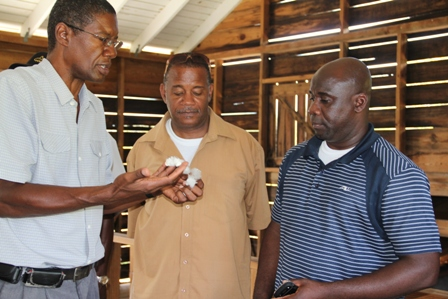 (L-R) Director of Agriculture Mr. Keithley Amory, Acting Permanent Secretary in the Ministry of Agriculture Mr. Eric Evelyn, Minister of Agriculture in the Nevis Island Administration Hon. Alexis Jeffers look at cotton at the Cotton Ginnery in Indian Castle