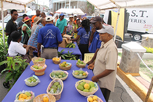 Members of the public look on as a staff member of the Department of Agriculture conducts a grafting session at the annual Mango Madness Festival hosted in Charlestown on July 11, 2014