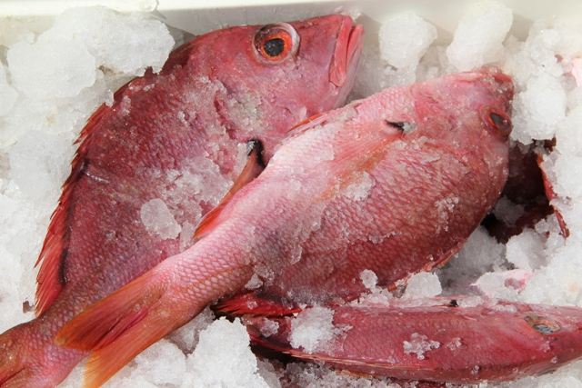 Freshly-caught local red snapper on ice (file photo)