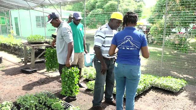 Farmers receiving seedlings from an officer at the Department of Agriculture at the Prospect Experimental Station on December 06, 2017