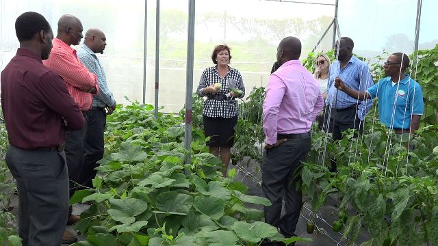 New Zealand's High Commissioner to St. Kitts and Nevis Her Excellency Jen Henderson (middle) tours the shade house vegetable garden at the Charlestown Primary School with (l-r) Mr. Kevin Barrett, Permanent Secretary in the Ministry of Education; Mr. Steven Duggins, Food and Agriculture Organisation Contractor, Mr. Huey Sargeant, Permanent Secretary in the Ministry of Agriculture; Ms. Latoya Jeffers Charlestown Primary School Principal (partly hidden); Ms. Ruth Delaney, Deputy High Commissioner; Mr. Augustine Merchant, Coordinator of the Inter-American Institute for Cooperation on Agriculture in St. Kitts and Nevis; Mr. Walcott James, Chief Extension Officer in the Department of Agriculture and Mr. Randy Elliott, Director of Agriculture (middle) on June 05, 2018
