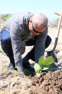 Hon. Spencer Brand, Minister of Minister of Environment, Physical Planning, Public Works and Water Services planting a Sea Grape tree at the Nevis Historical and Conservation Society's New River Coconut Walk Reforestation Project in St. James' Parish on April 23, 2019