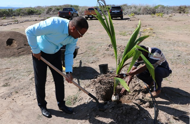 Hon. Mark Brantley, Premier of Nevis, plants a Malayan Dwarf coconut tree at the Nevis Historical Conservation Society's New River Coconut Walk Restoration Project on April 23, 2019 with assistance from Mr. Keithley Amory, Project Coordinator