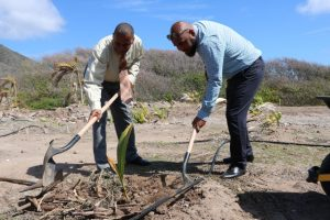 Hon. Eric Evelyn, Minister of Culture, plants a local coconut tree at the Nevis Historical Conservation Society's New River Coconut Walk Restoration Project on April 23, 2019 with assistance from Mr. Huey Sargeant, Permanent Secretary in the Ministry of Agriculture