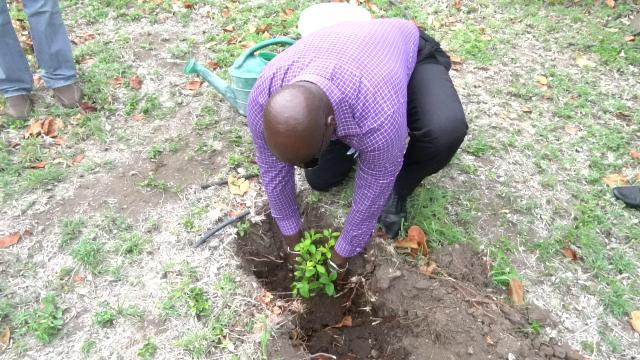 Hon. Alexis Jeffers, Deputy Premier of Nevis and Minister of Agriculture, plants the first fruit tree at the government-owned farm in Cades Bay on May 07, 2019, the first of 500 to be planted on the island as part of Agriculture Awareness Month 2019