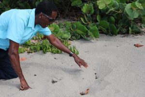 Mr. Lemuel Pemberton, Deputy Director of Marine Resources in the Department of Marine Resource in Nevis, points to tell-tale signs in the sand indicative of poaching activity at Cades Bay recently (file photo)