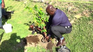 Hon. Alexis Jeffers, Deputy Premier of Nevis, and also the Minister of Agriculture, planting a fruit tree with a student of the St. Thomas' Primary School at the school grounds on January 29, 2020, signalling the launch of a tree planting programme by the Ministry and Department of Agriculture on Nevis
