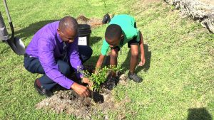 Hon. Eric Evelyn, Minister of Youth on Nevis, planting a fruit tree with a student of the St. Thomas' Primary School at the school grounds on January 29, 2020, to launch a tree planting programme by the Ministry and Department of Agriculture on Nevis