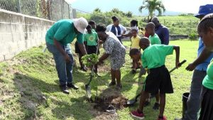 Ms. Norlene Smithen, Principal of the St. Thomas' Primary School, planting a fruit tree with students on the school grounds on January 29, 2020, at the launch of a tree planting programme by the Ministry and Department of Agriculture on Nevis