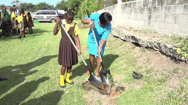 Mrs. Avril Elliott, Education Officer in the Department of Education with responsibility for the St. Thomas' Primary School, plants a tree with a student of the St. Thomas' Primary School at the school grounds on January 29, 2020, to launch a tree planting programme by the Ministry and Department of Agriculture on Nevis