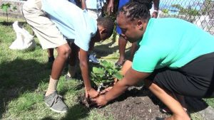 Mrs. Lorencia Tyson-Clarke, Director of the Trade and Consumer Affairs Department, plants a fruit tree with a student on the grounds of the Maude Crosse Preparatory School on March 13, 2020, as part of a collaborative effort by Department of Trade and Consumer Affairs and the Department of Agriculture in its island wide environmentally-friendly tree planting project