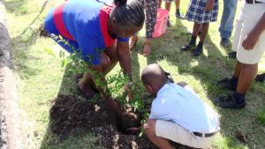 Mrs. Ellen Grant, Principal of the Maude Crosse Preparatory School, plants a tree with a student as part of a collaborative effort by Trade and Consumer Affairs Department and the Department of Agriculture in its islandwide environmentally-friendly tree planting project