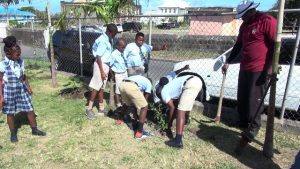 Students of the Maude Crosse Preparatory School learning to tend to newly planted fruit treed under the watchful eye of an officer from the Department of Agriculture following a tree planting exercise on the school grounds on March 13, 2020