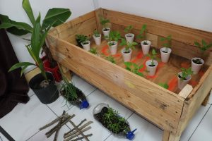 Sample of seedlings for distribution to participants in a backyard gardening project