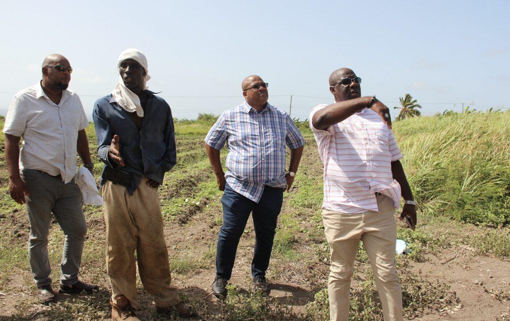 """l-r) Mr. Huey Sargeant, Permanent Secretary in the Ministry of Agriculture on Nevis; Mr. Ron Dublin-Collins, Permanent Secretary in the Ministry of Agriculture in St. Kitts (third from left); and Hon. Alexis Jeffers, Minister of Agriculture on Nevis and Minister of Agriculture in the Federal government; with Mr. Godwin """"Mike"""" Browne (second from left) on his farm at New River during a tour on July 28, 2020"""